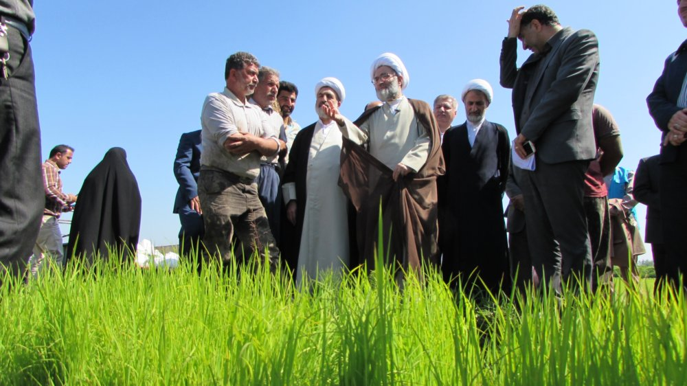بازدید آیت الله فلاحتی از روند کشت مکانیزه برنج در گیلان و خداقوت به شالیکاران+ گزارش تصویری